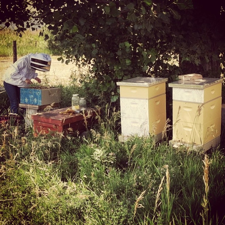 Wink of The Honeybee: Why I Followed an Unlikely Passion and The Insects That Captured My Heart