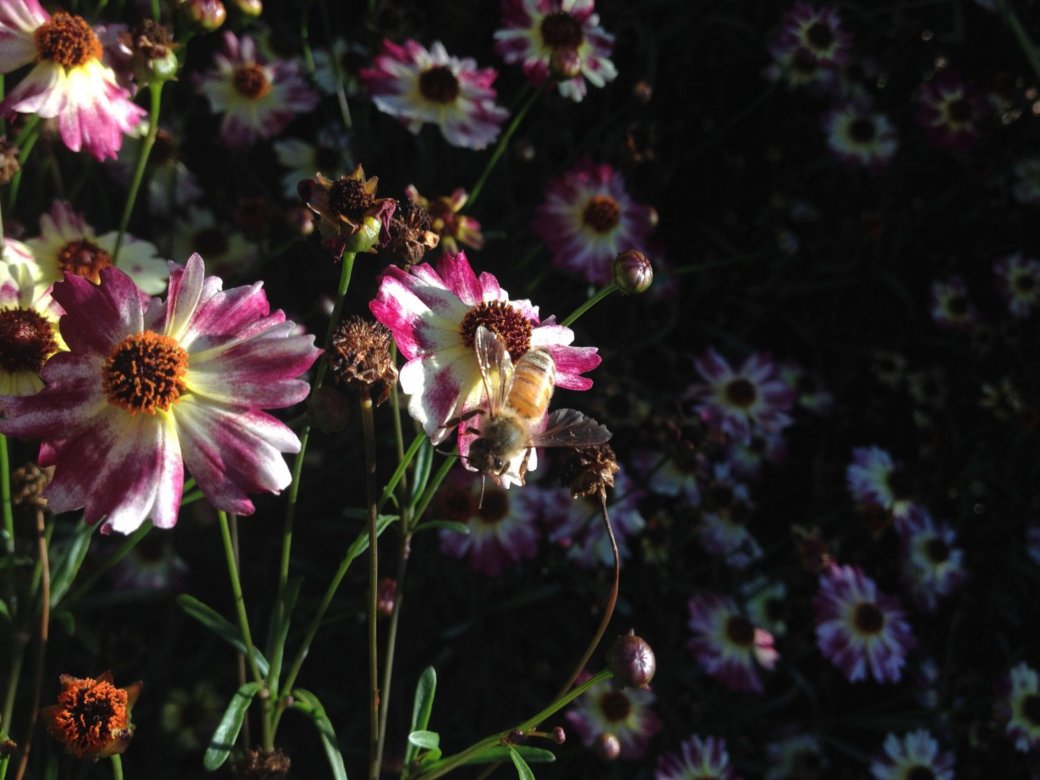 One Honeybee's Lesson on Compassion: A Reminder to Never Underestimate