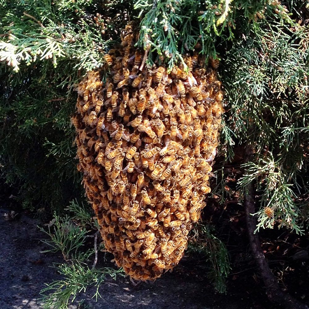 Spring in the Hive: Wisdom from the Bees to Your Inner Hive