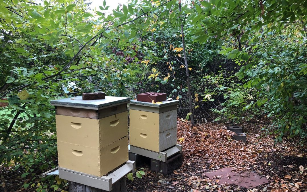 Fall in The Hive: Wisdom from the Bees to Your Inner Hive